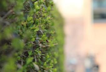 hækplanter online
