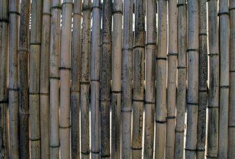 kæmpe bambus