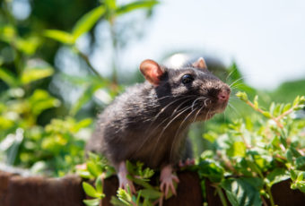 rotter i haven
